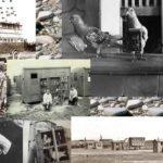 Collage van postduiven in oorlogstijd