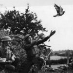 Engelsen versturen post per duif. WO1.